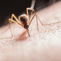 Najbrži način da umirite kožu nakon uboda komarca