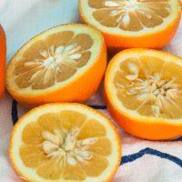Upoznajte gorku pomorandžu i njene benefite po zdravlje i mršavljenje